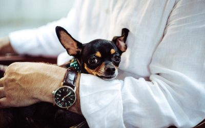 Seniors and the Benefits of Having a Pet